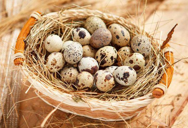 Корзинка с яйцами перепела