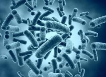 Полезные бактерии для человека