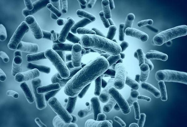 Микробы палочки