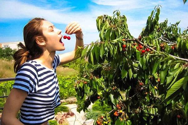 Девушка ест свежую черешню