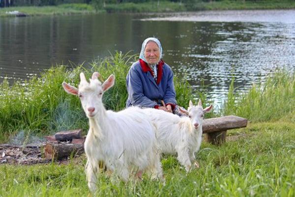 Бабушка с козами на берегу реки
