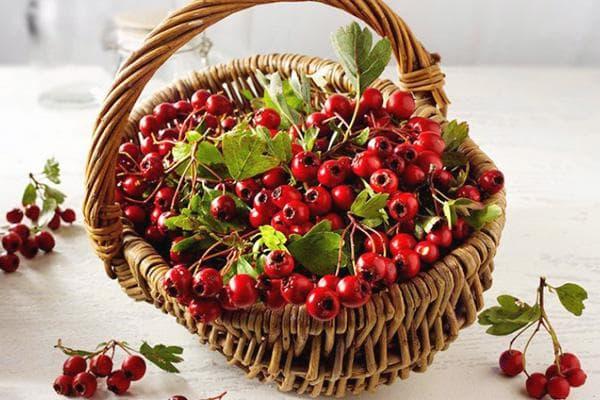 Корзина с ягодами боярышника