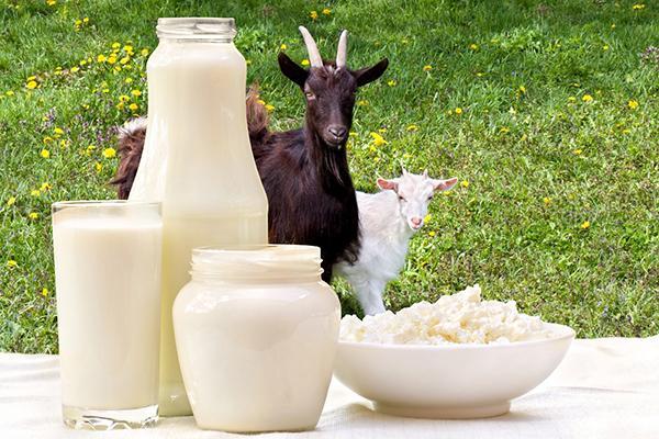 Козы и продукты из козьего молока