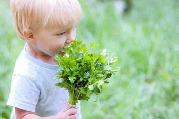 Ребенок с пучком петрушки